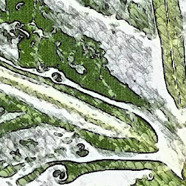 4. Something green ( can you guess what it is ) by Allison Buist - Abstract Patterns