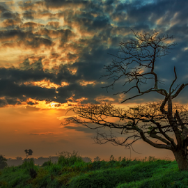 It is a New Dawn, it is a New Day. by KIN WAH WONG - Landscapes Sunsets & Sunrises ( new day, cloudy day, scenic, morning, landscape, dead tree, alone tree, old tree, new life, scene, sunrise, scenery, new dawn, lonely tree )