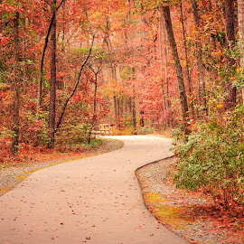 Cape Fear River Trail by Lou Plummer - City,  Street & Park  City Parks (  )