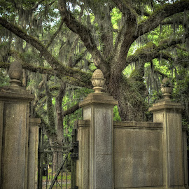 Welcome to Wormsloe by Sean Camp - Buildings & Architecture Decaying & Abandoned ( gateway, spooky, old town, trees, architecture, gate )