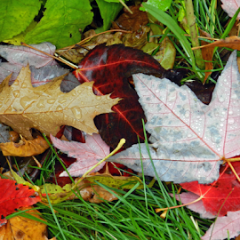 Autumn Rain by Kerry  Milligan - Nature Up Close Leaves & Grasses