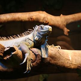 by Georgina Barrett - Animals Reptiles