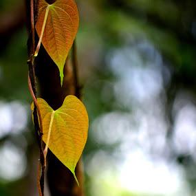by Vijayendra Venkatesh - Nature Up Close Leaves & Grasses