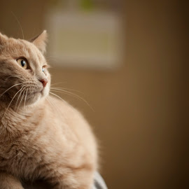 by Dragan Duric - Animals - Cats Portraits