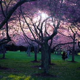 Corwell Park, Auckland by Anupam Hatui - City,  Street & Park  City Parks ( park, light, spring, photography )