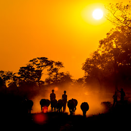At the end of the day, home is where the heart is! by Nelson Varte - Landscapes Sunsets & Sunrises ( home, village, sunset, boys, return, evening, cows )