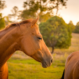 To many, the words love, hope and dreams are synonymous with horses.  Author Unknown by Esther Visser - Animals Horses