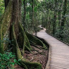 Tree Tops Walk by Jie Jack - Nature Up Close Trees & Bushes ( gold coast, jungle, trees, walkway, walk, tree tops,  )