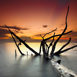The Fallen Mangrove by Firdaus Zulkefili - Landscapes Sunsets & Sunrises ( susnet, seascapes, kelanang, beach, waterscapes, landscape, mangrove )