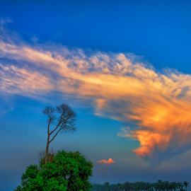 Standout by KIN WAH WONG - Landscapes Cloud Formations ( clouds, blue sky, old tree, sunsets, scenic, scenery, landscape, dead tree, standout )