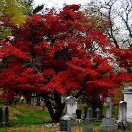 Greenwood Cemetery, Brooklyn, NY. by Andrew Piekut - City,  Street & Park  Cemeteries