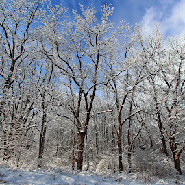 by Dipali S - Nature Up Close Trees & Bushes ( icy, winter, bushes, snow, icicles, trees )