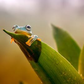 Lazy Morning by Dikky Oesin - Animals Amphibians ( nature, frog, green, amphibian, jump, animal,  )