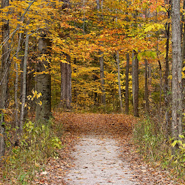 Autumn path by Dan Ferrin - Landscapes Forests ( nature, autumn, path, forest, landscape )