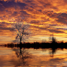 Fire Painters In the Sky by Bill Pevlor - Landscapes Sunsets & Sunrises ( clouds, water, tree, ripples, sunset, dramatic )