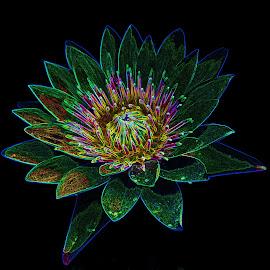 waterlily by Asif Bora - Digital Art Things