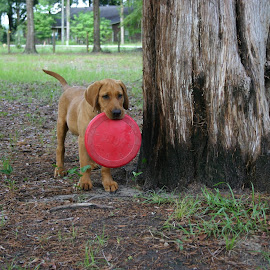 frisbee time by David Friar - Animals - Dogs Playing ( play catch, frisbee time, please throw it, play time, let's play )