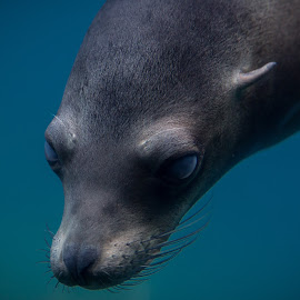 Seal of Approval by Mark McLaughlin - Animals Sea Creatures