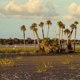 Oasis by Tom Moors - Landscapes Prairies, Meadows & Fields ( clouds, wetlands, florida, palm trees, orlando, birds, oasis, swamp )