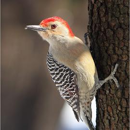 by Dennis Bartsch - Animals Birds (  )