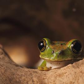 by Jan Fox - Animals Amphibians