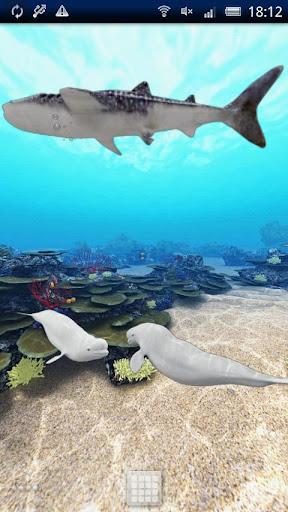 Dolphin Ocean 360° Trial