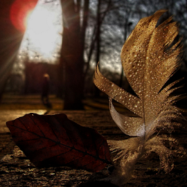 *** by Jurijs Ratanins - Instagram & Mobile Android ( mobilography, park, leave, nature, morning, feather, sun, city )