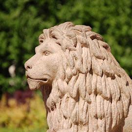 Lion in Duthie Park, by Ian Jukes - City,  Street & Park  City Parks ( lion, uk, statue, duthie park, aberdeen )
