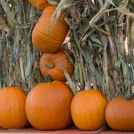Pumpkin Display by Janet Marsh - Food & Drink Fruits & Vegetables ( pumpkins,  )