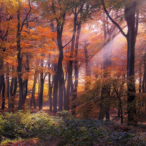 Golden Woodland Dawn by Ceri Jones - Landscapes Forests