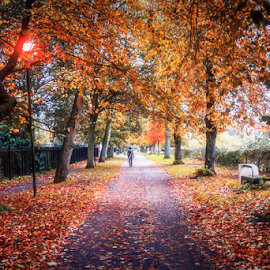 Autumn In The Park by Joe Kirby - City,  Street & Park  City Parks ( autumnal, autumn leaves, park, autumn, rowntree park york, parks, autumn colours, york, rowntree park, autumn colors )