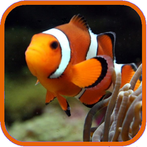 Aquarium Live Wallpaper Free