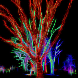 Holiday Tree Lights-Meadowlark by Sharon Kennedy - Abstract Patterns ( abstract, nature, holiday lights, trees, mood, mood factory, holiday, christmas, hanukkah, red, green, lights, artifical, lighting, colors, Kwanzaa, blue, black, celebrate, tis the season, festive )