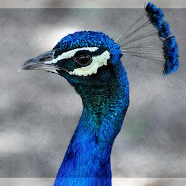 Blue Jewel by Sylvia Smialkowska - Illustration Animals