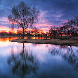 red and blue, no white by Edward Kreis - Landscapes Sunsets & Sunrises ( rgnd, reflection, constitution gardens, blue hour, obelisk, single exposure, washington monument, willow, landscape, singh ray, dawn, winter, damn geese, january, monument, long exposure, washington dc, sunrise, pond, national mall, early )