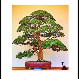 Bonsai Tree by Becky McGuire - Digital Art Things ( minnesota, tvlgoddess, tree, nature, becky mcguire, art, garden, st. paul, bonsai,  )