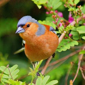by Tim Bennett - Animals Birds