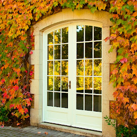 Winery door surrounded by fall colored leaves by Gale Perry - Buildings & Architecture Architectural Detail (  )