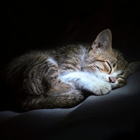 Sleeping kitten by Jeremy Mendoza - Animals - Cats Kittens ( animals, kitten, pet, sleeping, cute, , mood factory, color, lighting, moods, colorful, light, bulbs, mood-lites )