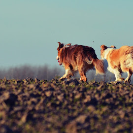 the 3 musketeers on the run by Veerle Melkebeke - Animals - Dogs Running
