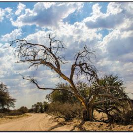 In the desert by Wessel Badenhorst - Landscapes Travel (  )