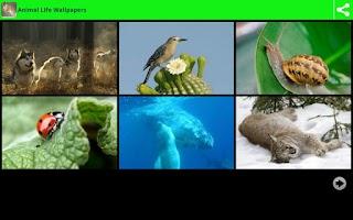 Screenshot of Animal Life Wallpapers