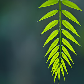 Arrays! by (GG) Girinath G - Nature Up Close Leaves & Grasses ( nature, wildlife, leaf, nikon, leaves, lens, photography )