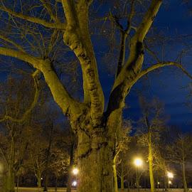 Tree - home alone by Aleksander Cierpisz - City,  Street & Park  Night