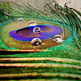 Water droplets on peacock feather by Janette Ho - Instagram & Mobile iPhone (  )