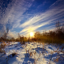 Don't Stop Believin' by Phil Koch - Landscapes Prairies, Meadows & Fields ( vertical, yellow, leaves, crop, love, sky, tree, nature, autumn, snow, perspective, orange, art, twilight, agriculture, horizon, portrait, environment, winter, dawn, serene, trees, lines, farm field, wisconsin, natural light, ray, landscape, phil koch, sun, photography, farm, horizons, clouds, office, park, green, scenic, morning, shadows, field, red, fog, blue, sunset, peace, meadow, summer, beam, sunrise, earth, mist )
