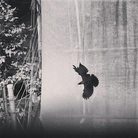 by Shiful Riyadh - Black & White Abstract ( abstract, bird, black & white, crow,  )
