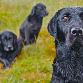 Three generations by Stephen Baker - Animals - Dogs Portraits
