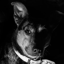 Orion by Serge Thonon - Animals - Dogs Portraits ( animaux )