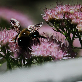 Buzz by Anna Tripodi - Nature Up Close Trees & Bushes ( bees, flowers, pretty, garden,  )
